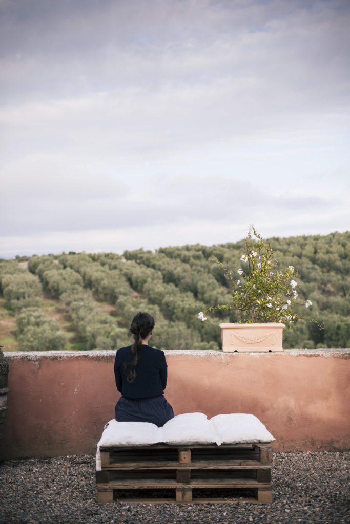olive trees Italy